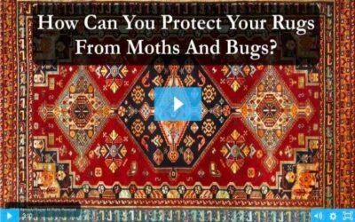 Moth And Bug Protection