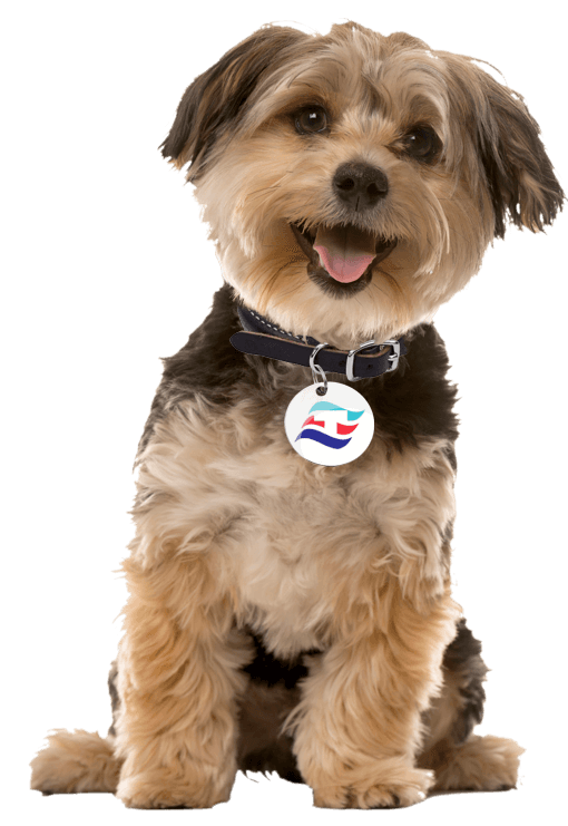 Happy Dog with Thomas Pet Tag